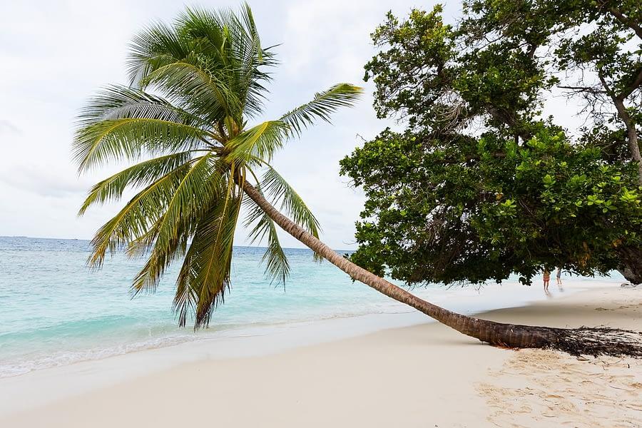 Bandos_island-hochzeiten-heiraten-Malediven-19