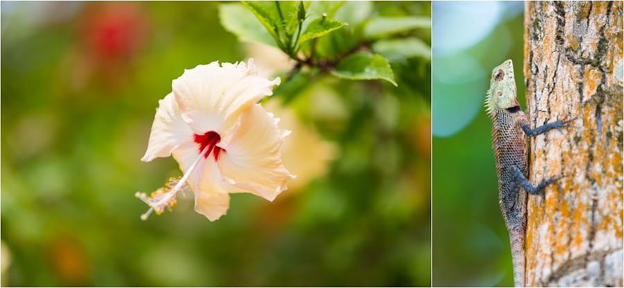Bandos_island-hochzeiten-heiraten-Malediven-26